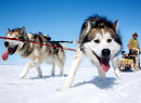 The_dog_sledding_for_two-1