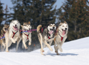 The_dog_sledding_for_two-2